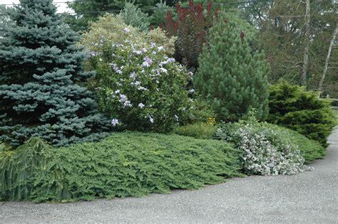 Evergreen Garden by Designing For Winter Interest