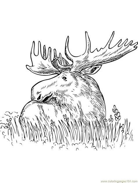 Coloring Pages Moose Sitting Grass Mammals Gt Moose Moose Colouring Pages