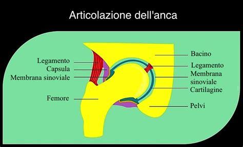 contrattura interno coscia dolore alla coscia sinistra o destra