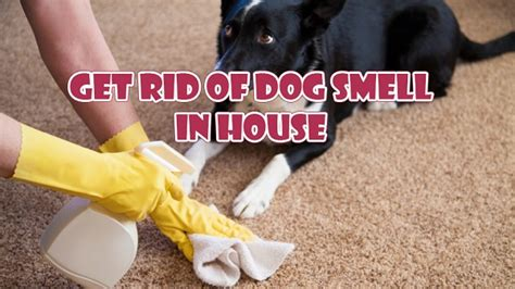dog smell in the house get rid of dog smell in house without getting rid of the dog