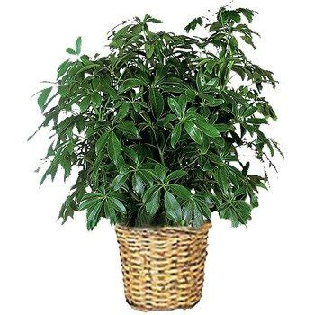 common house plants for funerals house plants for funerals popular house plans and design