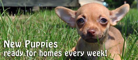 puppies dothan al pets dothan al