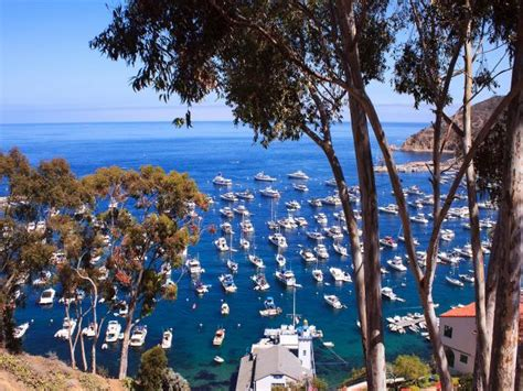 boats to catalina island from los angeles 8 outdoor activities to do in la right now los angeles