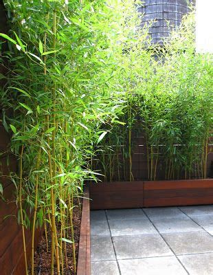 Concrete Planters Seattle by Best 20 Roof Gardens Ideas On Terrace Garden Rooftops And Gardening