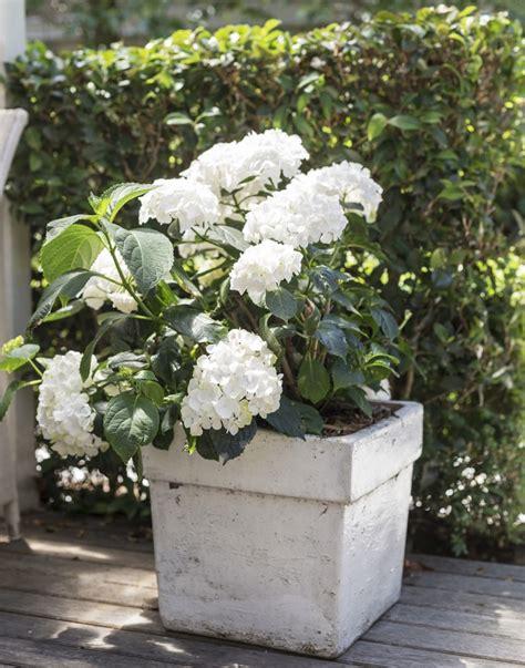 White Garden Planters by Field Guide Hydrangea Gardenista