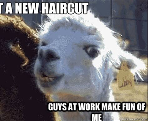 New Haircut Meme - get a new haircut guys at work make fun of me
