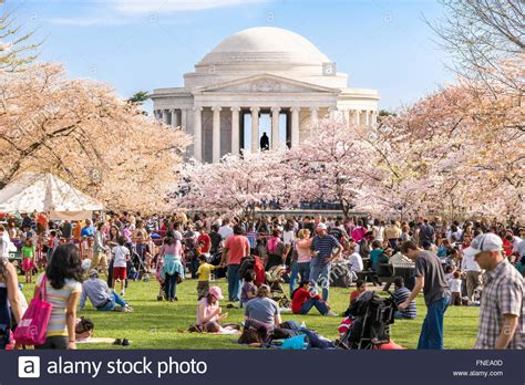 cherry blossom festival dc washington dc cherry blossoms jefferson memorial crowds