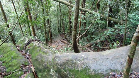 Essay About Sinharaja Forest by Sinharaja Forest