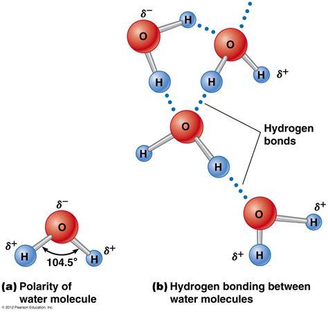 building bio molecules bio coach