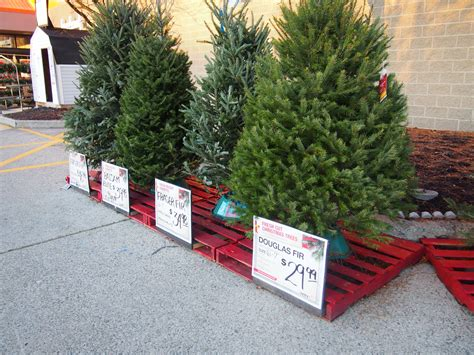 home depot christmas tree cost home depot tree prices decore