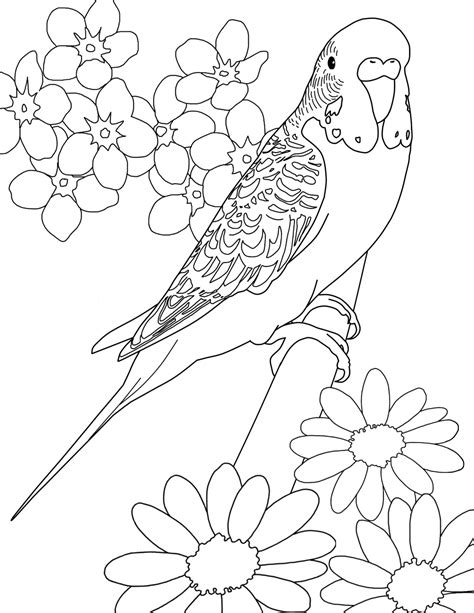 Parakeet Coloring Page free budgie bird coloring pages
