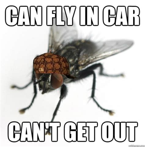 Fly Out Memes - can fly in car can t get out scumbag fly quickmeme