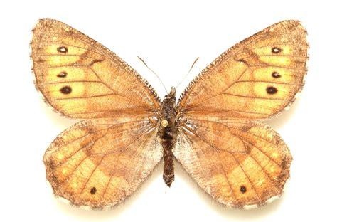 St Kupu gambar kupu kupu yang cantik dan indah kumpulan gambar