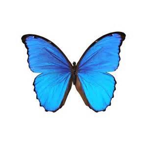 muurtattoo blauwe vlinder met klok silhouette stickers