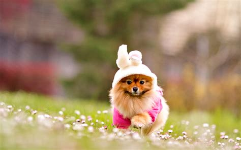 amazing free dog wallpapers to download graphicmania adorable dog wallpapers 1920x1200 1336266