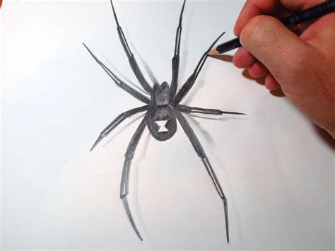 how to draw black widow spider youtube