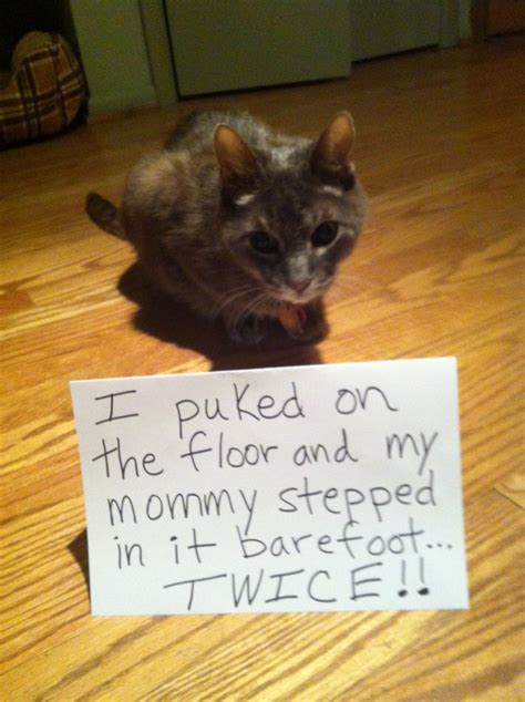 cat freaking out maybe in heat 1000 images about cat shaming on