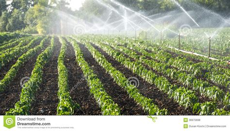 green food field a royalty free stock photo from photocase irrigation of vegetables royalty free stock photos image