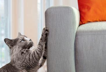 kat krabt aan behang is your cat scratching furniture cat lover s box