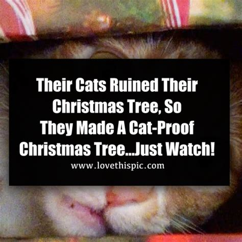 cat proof tree their cats their tree so they made a cat