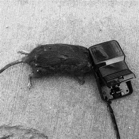 Dijamin Perangkap Tikus Joni Cat joni cat perangkap tikus terbaik di indonesia joni cat