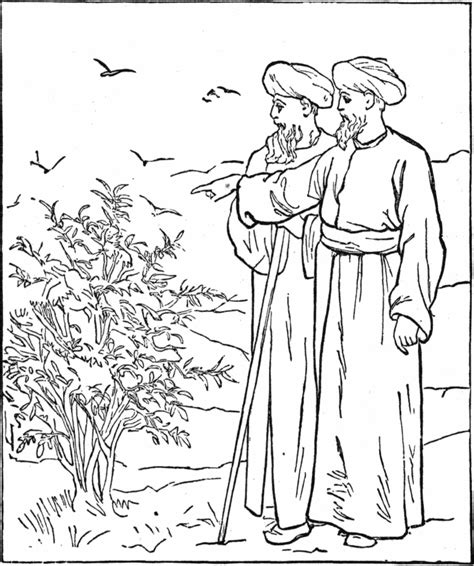 coloring page of a fig tree fig tree parable coloring page sketch coloring page