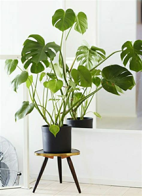 good indoor plants 99 great ideas to display houseplants indoor plants