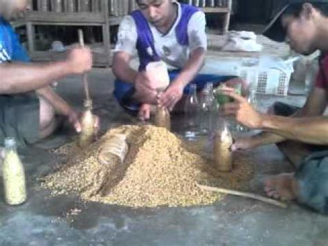 Bibit Jamur Tiram Fo pembuatan bibit f0 jamur tiram doovi