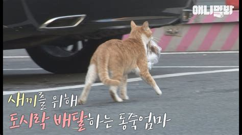 carrying bag of food cat was carrying bag of food but they didn t why when they followed