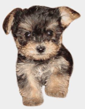 imagenes de perros animados con movimiento y frases im 225 genes con movimiento de perros