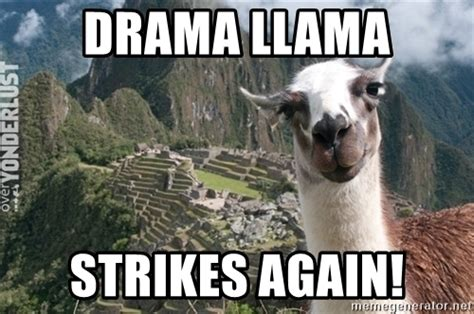 Drama Llama Meme - drama llama meme 28 images drama llama meme quotes