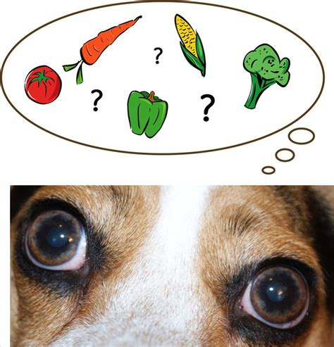 list of foods dogs can t eat a list of foods dogs can t eat cuteness