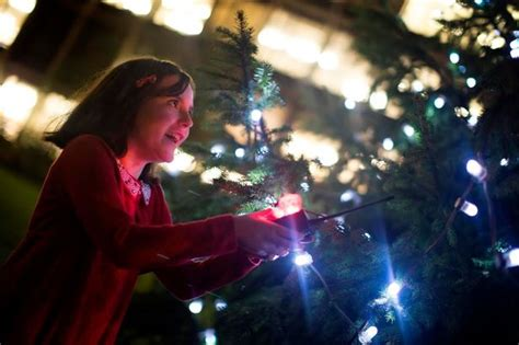 real xmas trees for sale newcastle 2016 where to buy your real tree in and around newcastle chronicle live