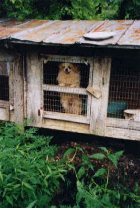 known puppy mills in missouri missouri voters pass puppy mill standards an all creatures animal rights article