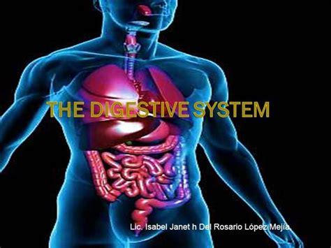 Digestive System Authorstream Digestive System Powerpoint