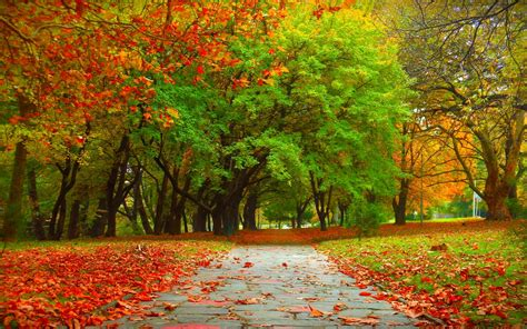 in fall autumn trees wallpaper 1325259