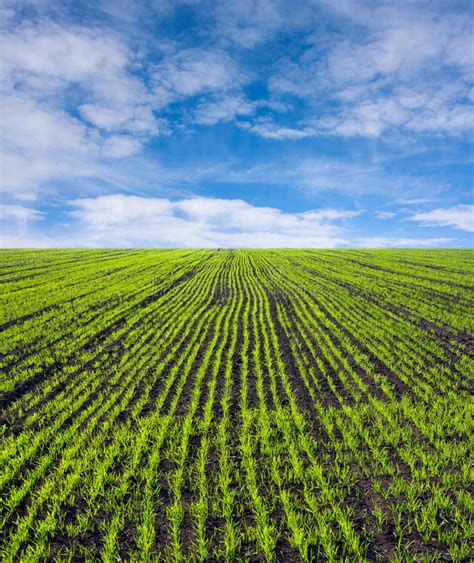 green food field a royalty free stock photo from photocase green farm field royalty free stock images image 12111859