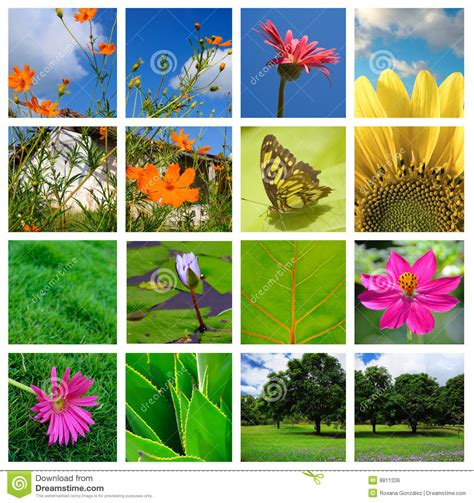imagenes de naturaleza varias spring and nature collage royalty free stock image image