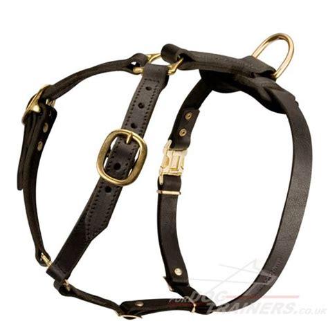 best harness for golden retriever best harness for golden retriever h7 1052 leather harness 163 44 91