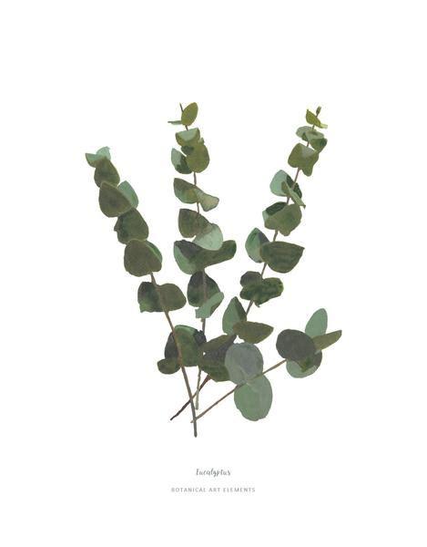 printable gum leaves eucalyptus print botanicalartelements