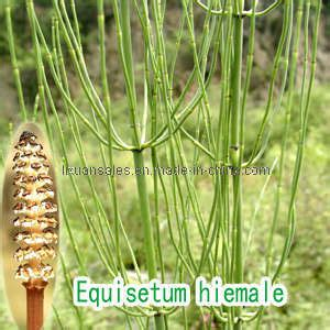 Bio Energy Yellow Taiwan horsetail plant extract silica china horsetail extract