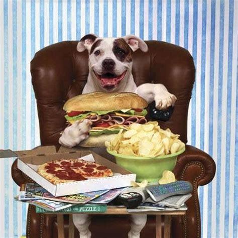 Table Food For Dogs by Pourquoi Ne Faut Il Pas Nourrir Chien 224 Table