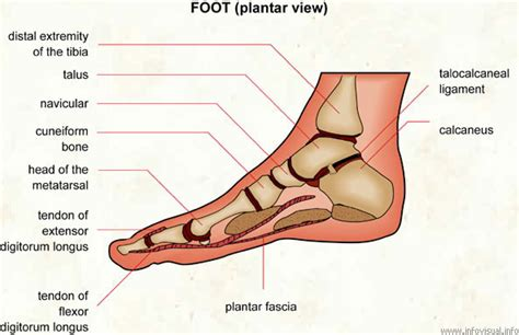 Planter Of Foot by