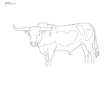 texas bull coloring page coloring pages