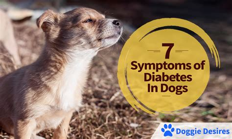 diabetes in dogs symptoms of diabetes in dogs