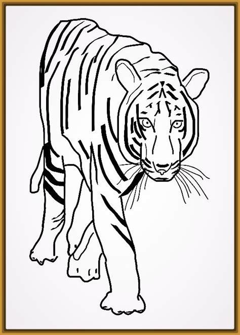 imagenes de tigres faciles para dibujar tigres para dibujar a lapiz faciles para imprimir fotos