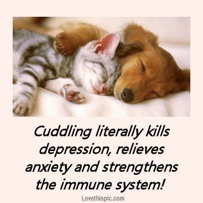 How To Cuddle On A by Cuddle Quotes For Quotesgram