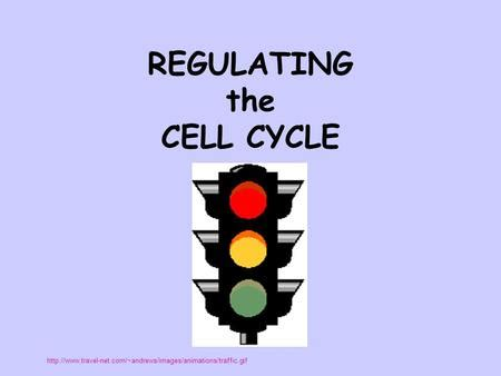 section 10 3 regulating the cell cycle answers regulating the cell cycle ppt download