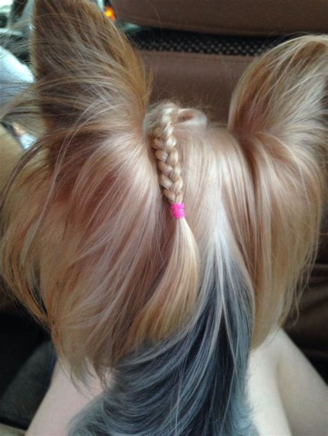 yorkie hair 25 best ideas about yorkie hairstyles on puppies