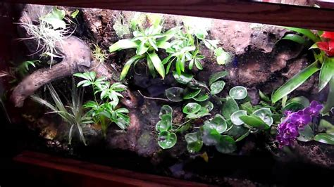 dart frog vivarium terrarium waterfall background youtube